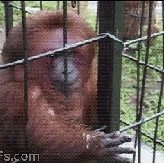 터프한원숭이